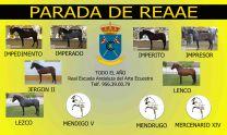 PARADA DE LA REAAE - GC Ecuestre