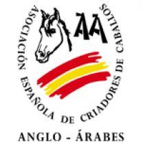 Catalogo de Reproductores de Anglo arabe - GC Ecuestre