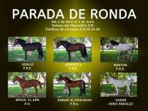 PARADA DE SEMENTALES DE RONDA - GC Ecuestre