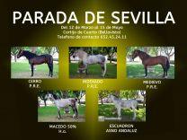 PARADA DE SEMENTALES DE SEVILLA - GC Ecuestre