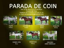 PARADA DE SEMENTALES DE COIN (MALAGA) - GC Ecuestre